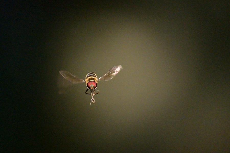 昆虫達の季節も終わりに近付いてきました。_d0148541_2174957.jpg