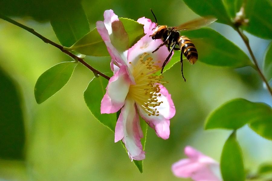 昆虫達の季節も終わりに近付いてきました。_d0148541_2181981.jpg