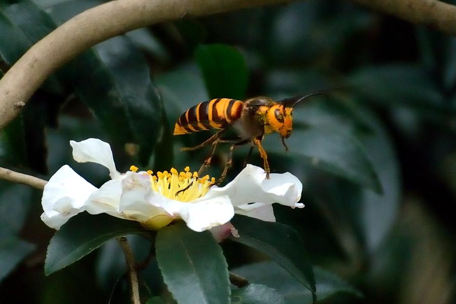 昆虫達の季節も終わりに近付いてきました。_d0148541_2183917.jpg