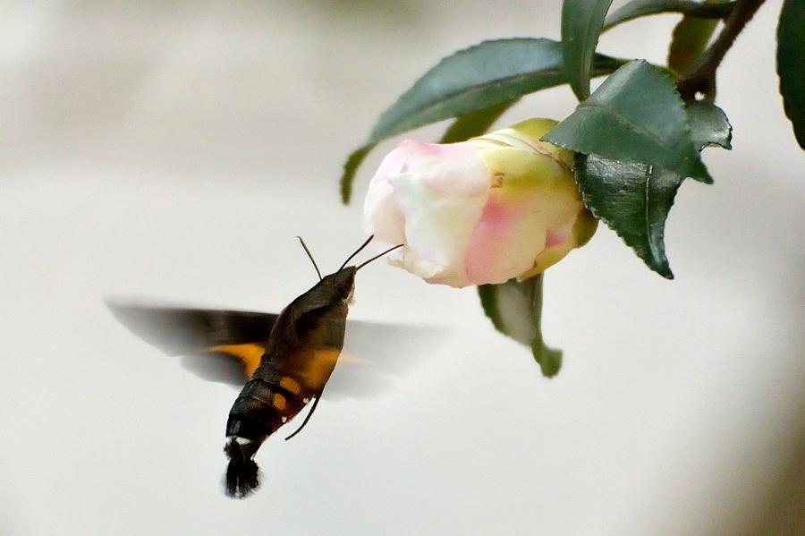 昆虫達の季節も終わりに近付いてきました。_d0148541_218481.jpg