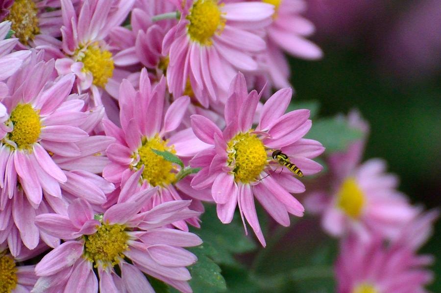 昆虫達の季節も終わりに近付いてきました。_d0148541_21884.jpg