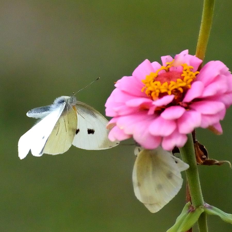昆虫達の季節も終わりに近付いてきました。_d0148541_2191721.jpg