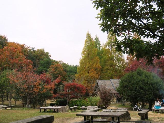 野鳥トレ 中山ノ大杣池28_b0227552_14472591.jpg