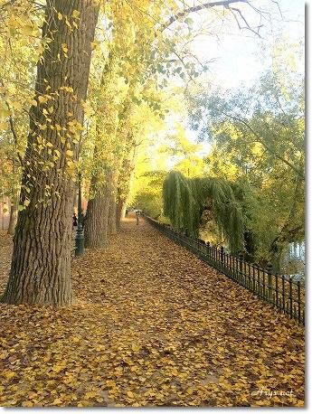 久しぶりの旅 ~美しすぎるブルージュの秋~_c0243369_1243722.jpg