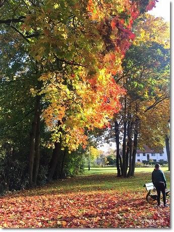 久しぶりの旅 ~美しすぎるブルージュの秋~_c0243369_20111453.jpg
