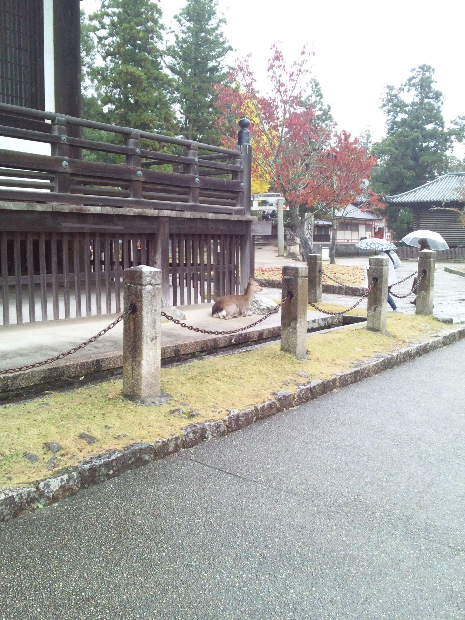 雨降り正倉さん_c0001670_21081753.jpg