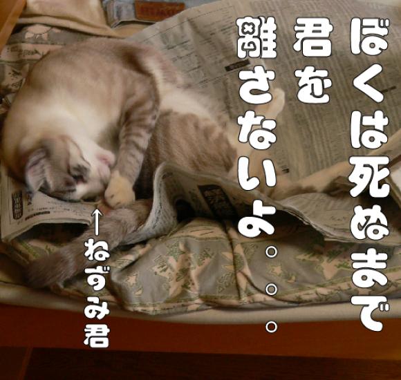 ねずみと友達_a0333195_18271964.png