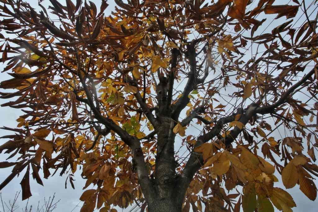 落ち葉はまだまだ・・・_a0148206_175130100.jpg