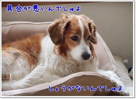 d0013149_23111113.jpg