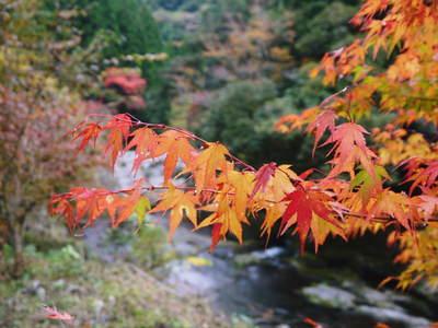 紅葉狩りにおすすめ!!菊池渓谷と菊池、阿蘇スカイラインの紅葉の穴場スポットを紹介!その2_a0254656_16571627.jpg