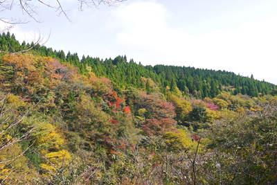 紅葉狩りにおすすめ!!菊池渓谷と菊池、阿蘇スカイラインの紅葉の穴場スポットを紹介!その2_a0254656_1742887.jpg