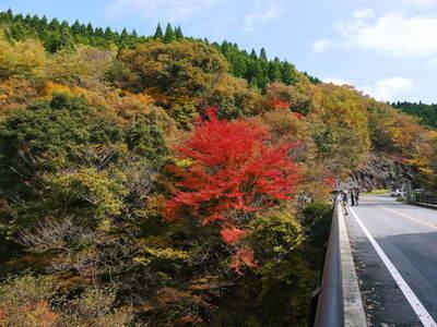 紅葉狩りにおすすめ!!菊池渓谷と菊池、阿蘇スカイラインの紅葉の穴場スポットを紹介!その2_a0254656_17531621.jpg
