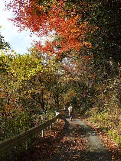 紅葉狩りにおすすめ!!菊池渓谷と菊池、阿蘇スカイラインの紅葉の穴場スポットを紹介!その2_a0254656_18212514.jpg