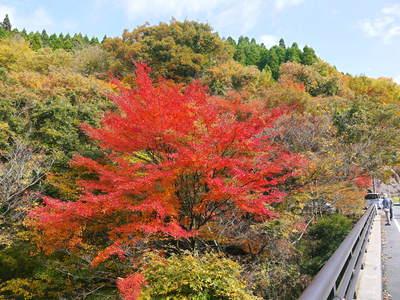 紅葉狩りにおすすめ!!菊池渓谷と菊池、阿蘇スカイラインの紅葉の穴場スポットを紹介!その2_a0254656_1844687.jpg