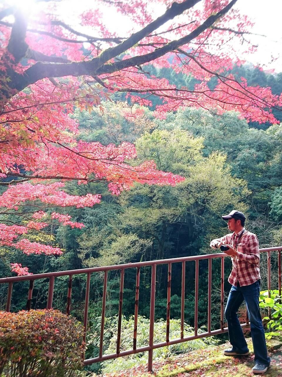 紅葉狩りにおすすめ!!菊池渓谷と菊池、阿蘇スカイラインの紅葉の穴場スポットを紹介!その2_a0254656_18481869.jpg