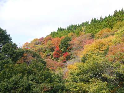 紅葉狩りにおすすめ!!菊池渓谷と菊池、阿蘇スカイラインの紅葉の穴場スポットを紹介!その2_a0254656_188143.jpg