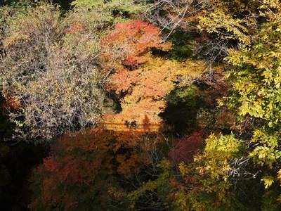 紅葉狩りにおすすめ!!菊池渓谷と菊池、阿蘇スカイラインの紅葉の穴場スポットを紹介!その2_a0254656_1893129.jpg