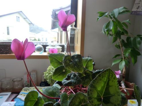 花と実_e0154400_164329.jpg