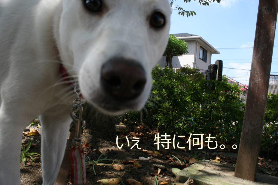あんこちゃんのお散歩_f0242002_0354230.jpg