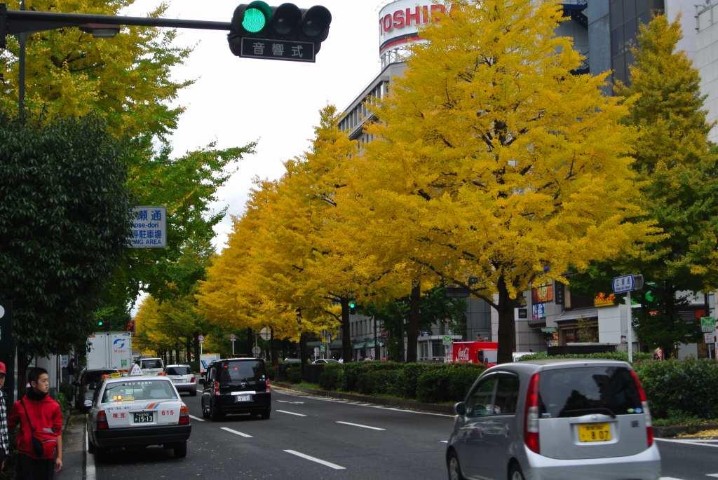 仙台市街にも紅葉が降りてきた_a0148206_1910882.jpg