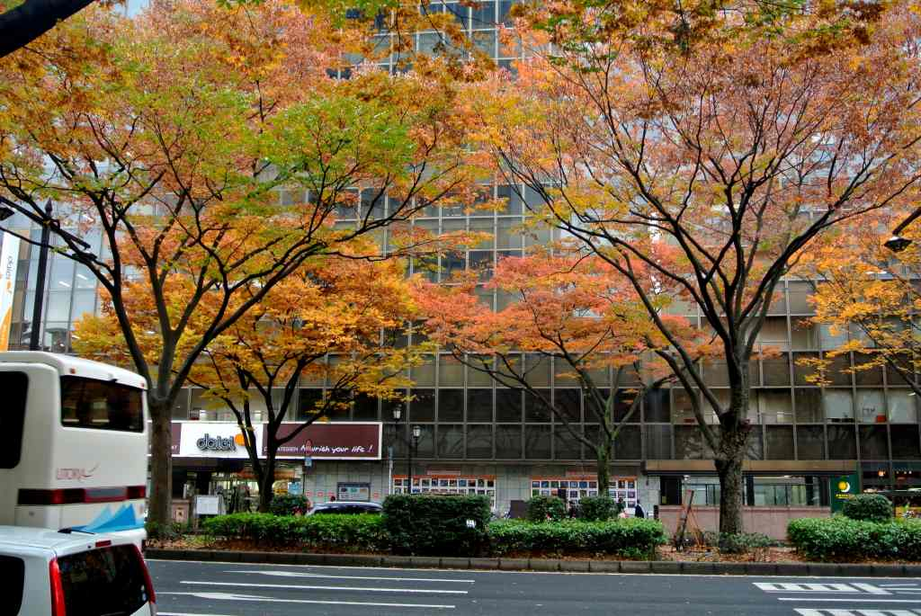 仙台市街にも紅葉が降りてきた_a0148206_1953277.jpg