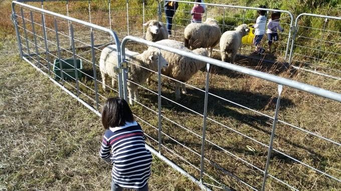 羊が何匹?_a0279022_18253943.jpg