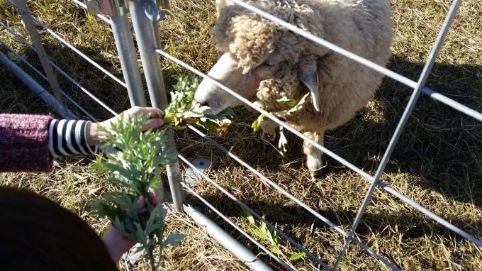 羊が何匹?_a0279022_19274781.jpg