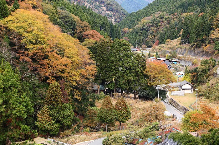 里山の秋_a0294534_20142196.jpg