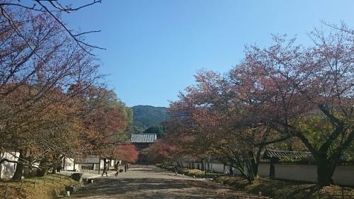 京都紅葉リフレッシュ_c0119937_03222201.jpg