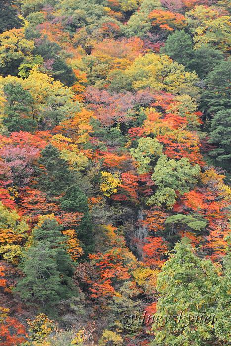秋色 紅葉 ~2~ 鬼怒楯岩大吊橋_f0084337_10225398.jpg