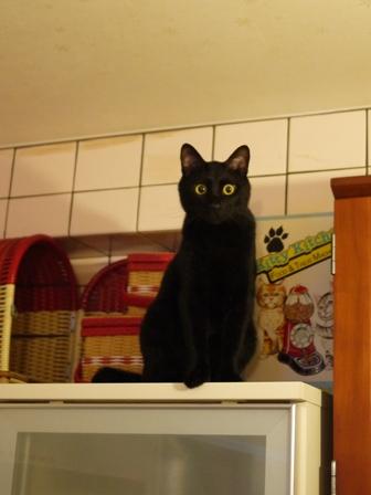高いとこ猫 ぎゃぉすてぃぁら編。_a0143140_22334122.jpg