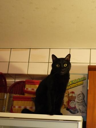 高いとこ猫 ぎゃぉすてぃぁら編。_a0143140_22343932.jpg