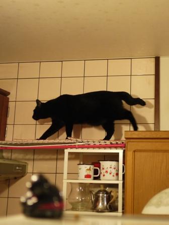 高いとこ猫 ぎゃぉすてぃぁら編。_a0143140_22365225.jpg