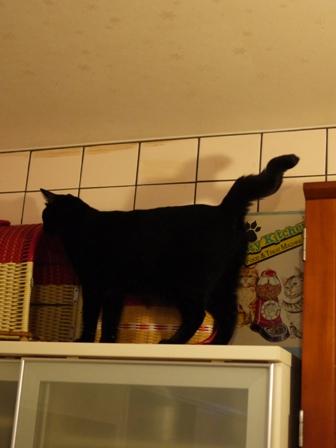 高いとこ猫 ぎゃぉすてぃぁら編。_a0143140_2237387.jpg