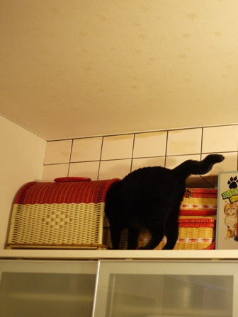 高いとこ猫 ぎゃぉすてぃぁら編。_a0143140_2238586.jpg