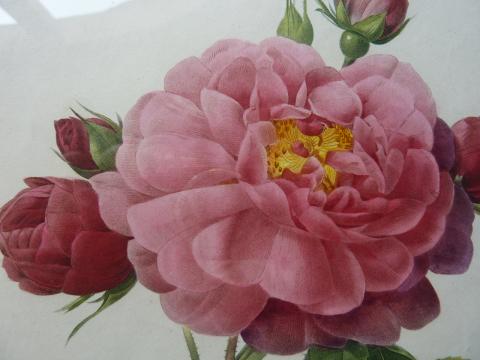 山梨家立美術館で開催中の「花の画家 ルドゥーテのバラ」展の見どころ(2)  スティップル・エングレーヴィング(点刻彫版法)_e0356356_16161642.jpg