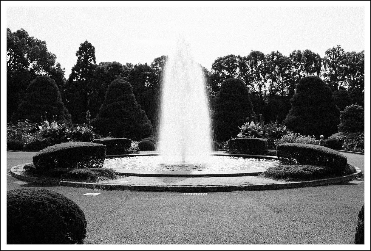 京都府立植物園(1)_e0354867_21073263.jpg