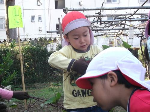 年少組とお芋さん_f0334882_17431553.jpg
