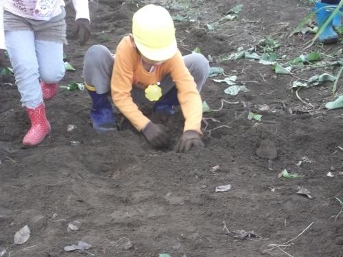 掘って、掘って。_f0334882_18545739.jpg