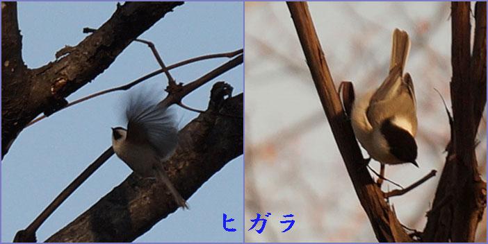 晩秋_d0162994_12594496.jpg