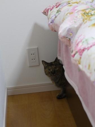 猫のお留守番 アメちゃんソラくん編。_a0143140_19465451.jpg
