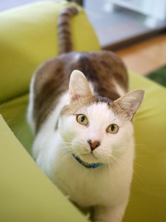 猫のお留守番 アメちゃんソラくん編。_a0143140_19492224.jpg
