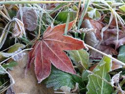 北軽井沢の冬が始まっています_c0341450_20503955.jpg