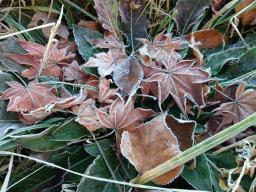 北軽井沢の冬が始まっています_c0341450_20555370.jpg