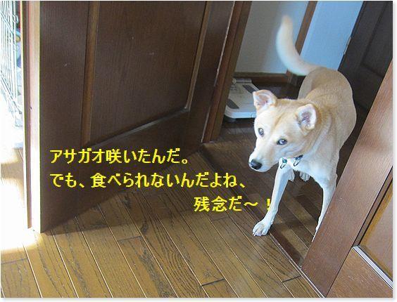c0006757_20025558.jpg