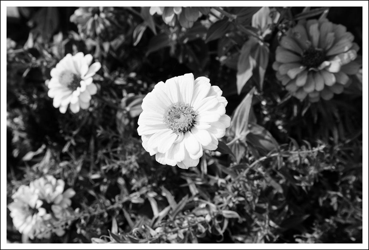 京都府立植物園(3)_e0354867_21042887.jpg