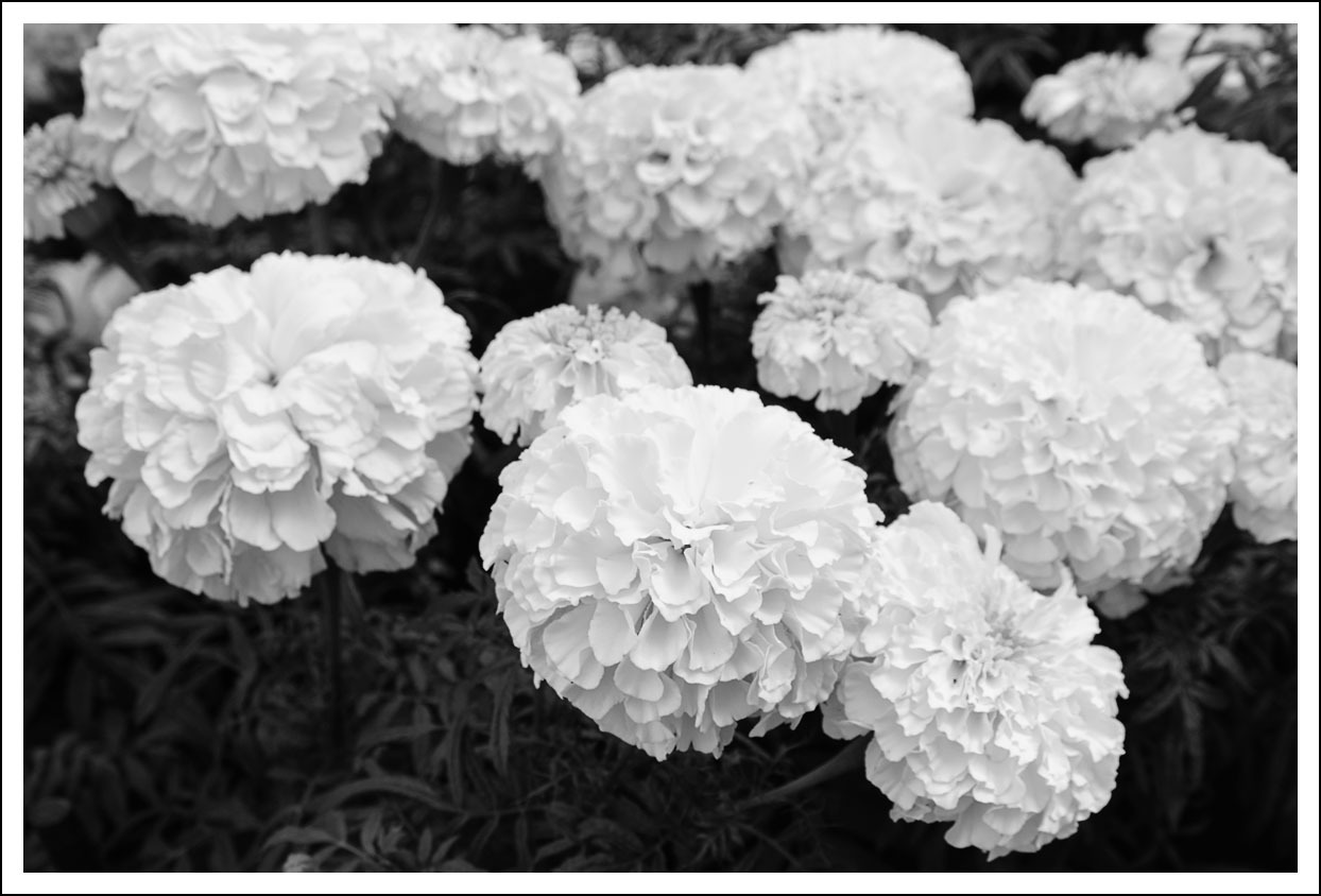 京都府立植物園(3)_e0354867_21045869.jpg