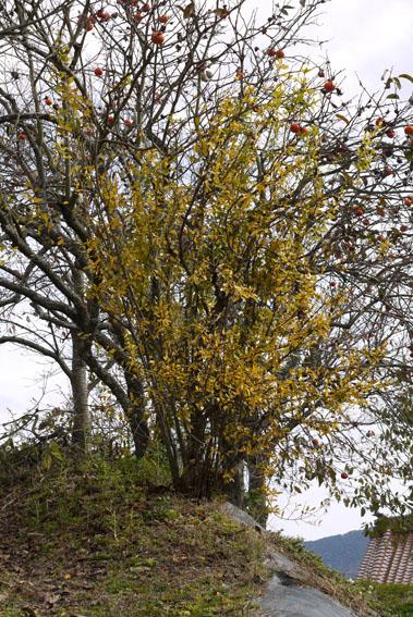 紅葉、落葉、冬支度_c0334574_1953072.jpg