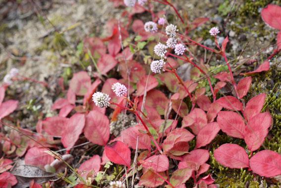 紅葉、落葉、冬支度_c0334574_19533396.jpg