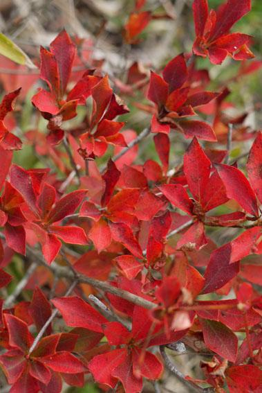 紅葉、落葉、冬支度_c0334574_19534567.jpg